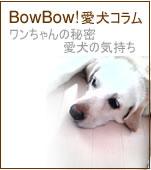 愛犬コラム