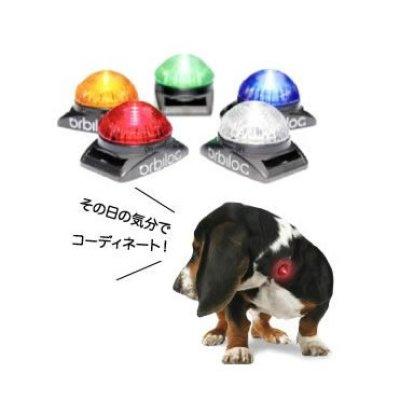 画像1: 中・大型犬にも対応するお散歩ライト【Orbilocペットセーフティーライト】