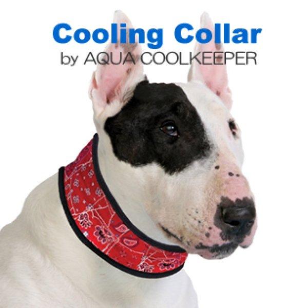 画像1:  暑い日のお散歩に清涼感【Cooling Collar】Sサイズ (1)