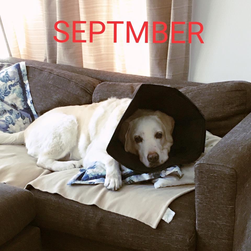 台風月9月。