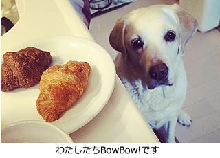 愛犬とスマイルライフBowBow!から皆さまへごあいさつ